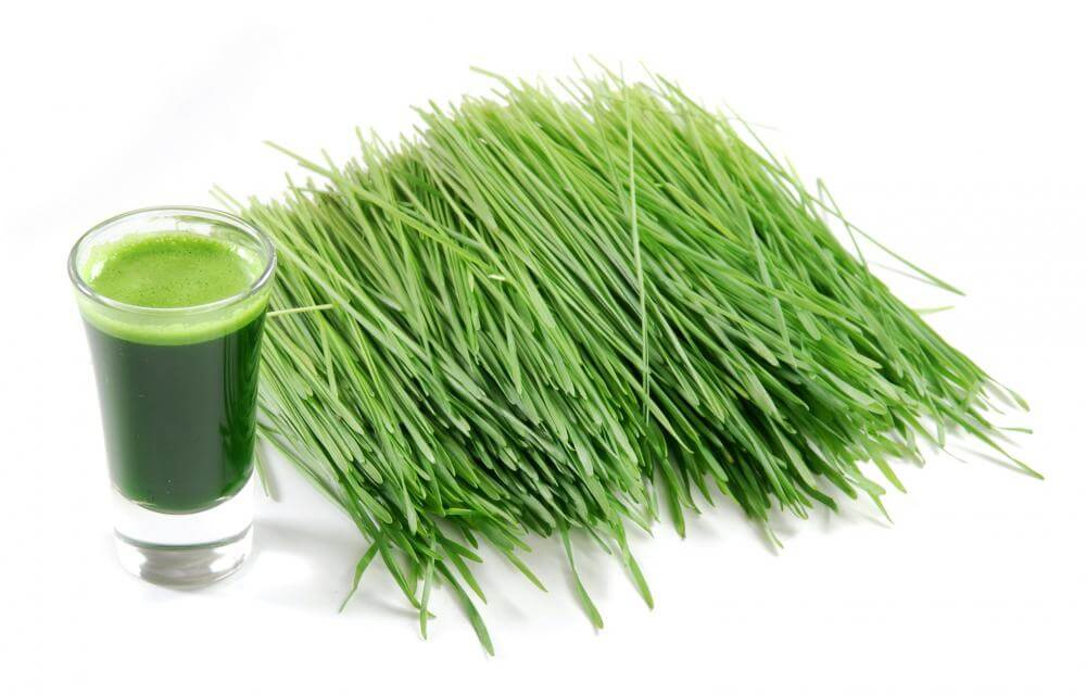 Wheatgrass for Kidney Stones